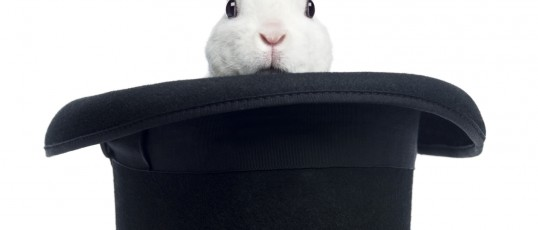 Mini rex rabbit appearing from a top hat, isolated